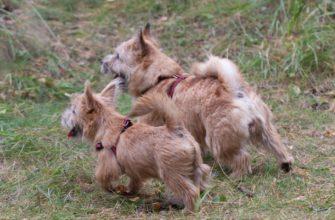 Любовь к животным, <br>или Жизнь ветеринарного врача